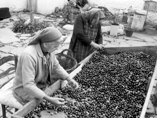 Old women picking olives